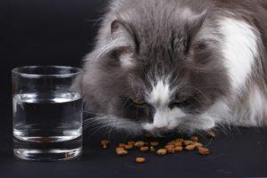 dry cat food brands