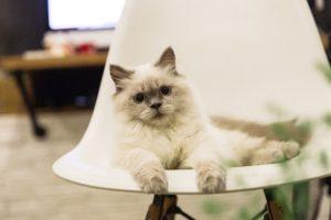 cat condo furniture